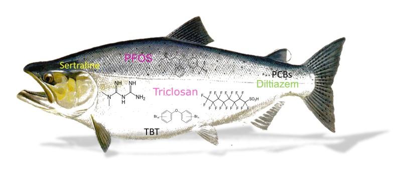 salmon-tissue-residues-shadow